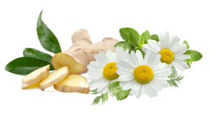 all natural digestive aid, remedy - Carbo Chamomilla Powder ingredients