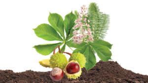 ingredients for Uriel's solum aesculus massage and body oil